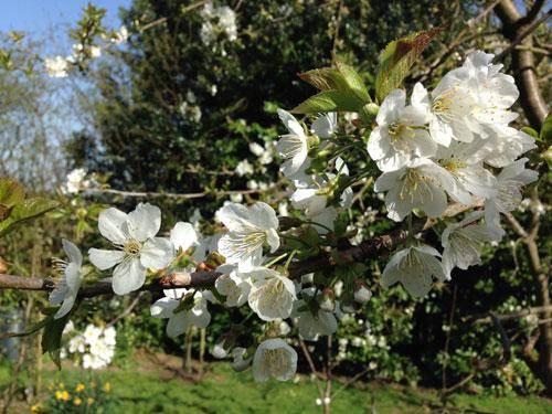 garden-photo-blossom