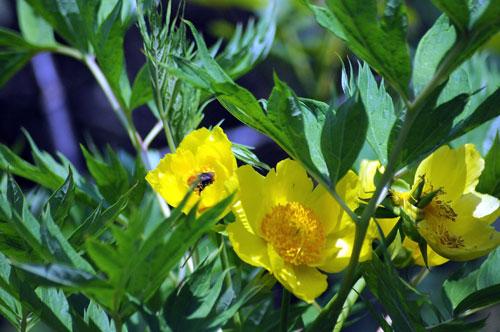 garden-in-may